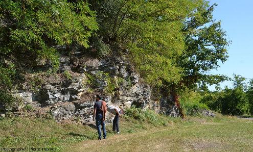 Ancien front de taille au voisinage de la D9 près de Régny (Loire) montrant les couches de calcaire du Viséen moyen