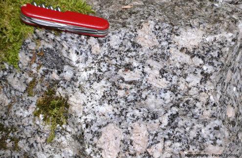Vue d'un secteur du front de taille de la carrière de Saint-Julien-la-Vêtre où les méga-cristaux de feldspath du granite sont de couleur rosée