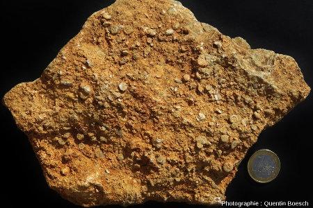 Calcaire à entroques du Muschelkalk
