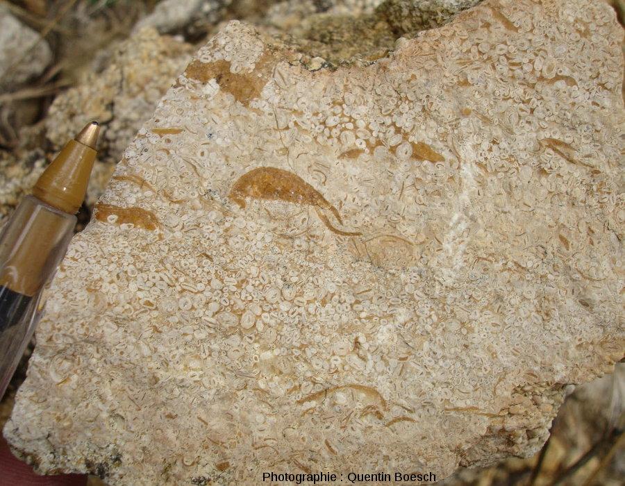 Calcaire oolithique du Bajocien
