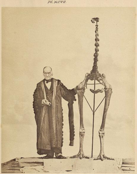 Sir Richard Owen à côté d'un squelette de moa (ordre des Dinornithiformes)