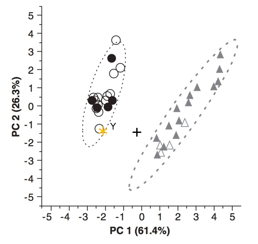 Analyse en composantes principales (ACP) des mesures effectuées sur les endocastes d'humains adultes (cercles blancs) et juvéniles (3ème molaire non sortie, cercles noirs), de chimpanzés communs adultes et juvéniles (triangles gris et blancs, respectivement), de MH1 (astérisque) et de deux Au. africanus (Sts 5, Y et Sts 60, +)