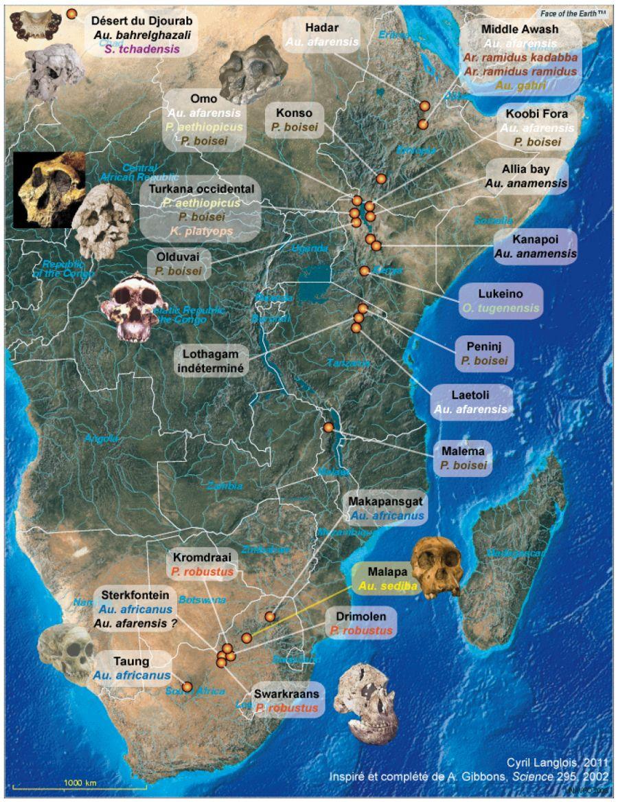 Répartition cartographique des fossiles d'Homininés mis au jour en Afrique