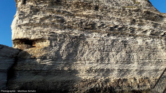 Détail d'une falaise de calcarénite (membre de Bonifacio)