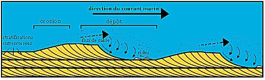 Formation de dunes sous-marines, selon un mécanisme très similaire à celui donnant des dunes éoliennes