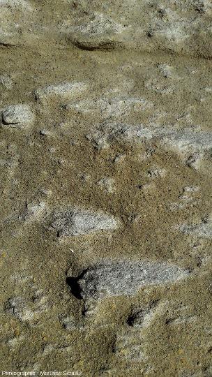 Détail des calcarénites du membre de Pertusato, au pied du cap du même nom