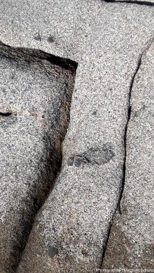 Enclaves pluricentimétriques arrondies à petits minéraux sombres, probables résultats d'un mélange de magmas et de l'assimilation incomplète de ce magma basiqued'origine mantellique par le magma calco-alcalin