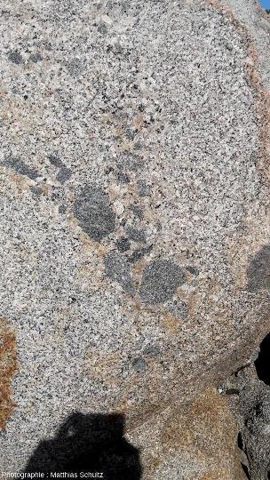 Série de plusieurs enclaves pluricentimétriques arrondies à petits minéraux sombres, probables résultats d'un mélange de magmas et de l'assimilation incomplète de ce magma basique d'origine mantellique par le magma calco-alcalin