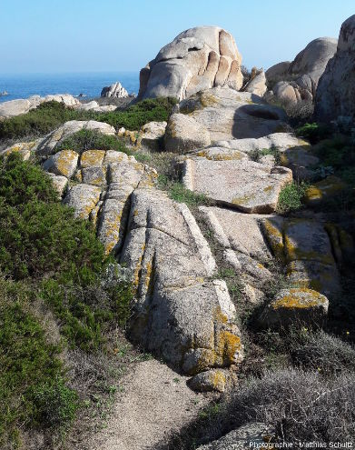 Filons blancs décimétriques de granitoïde microcristallisé (aplite) recoupant la granodiorite à grain moyen formant l'essentiel de l'ile de Lavezzo