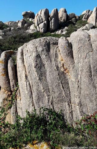 Petits filons blancs acides de dimension centimétrique (aplite? ou simples filons de quartz hyrdothermaux?) recoupant la granodiorite à grain moyen formant l'essentiel de l'ile de Lavezzo