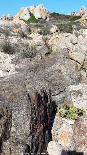 Filon gabbro-dioritique, large d'1m environ, intrusif au sein de la granodiorite de l'ile Lavezzo