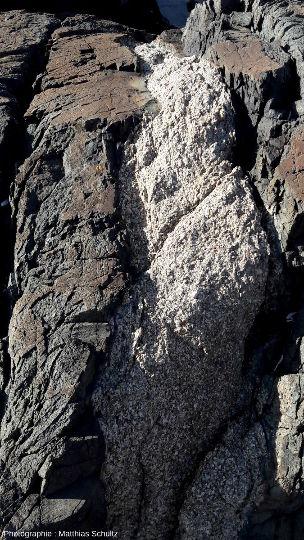 Détail de la série de filons basiques décimétriques dans la granodiorite de l'ile Lavezzo
