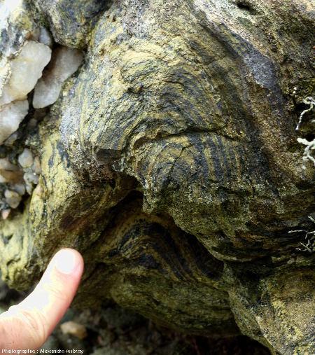 Gros plans sur des plis dans des glaucophanites de l'ile de Groix