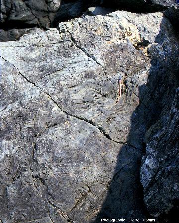 Plis replissés dans des glaucophanites de l'ile de Groix