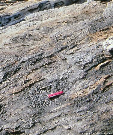 Dalle montrant des lawsonites (silicates de Ca et Al) tronçonnées dans une glaucophanite de l'ile de Groix