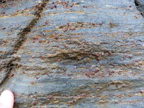 Glaucophanite de la plage des Grands Sables, ile de Groix