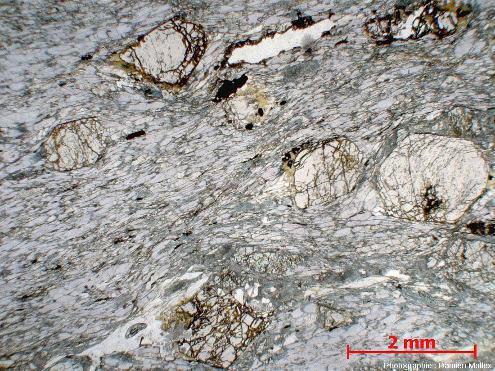 Lame mince de glaucophanite faciès éclogites de l'ile de Groix en LPNA