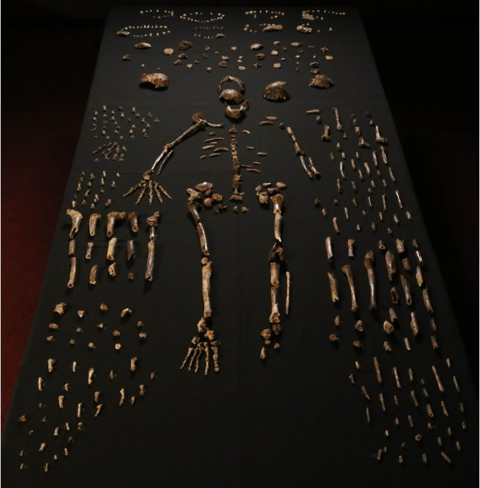 La présentation d'Homo naledi à la presse, en 2015