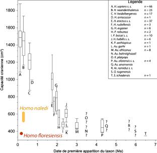 Gammes de volume cérébral des espèces fossiles d'hominines (en cm3) sur lequel on a ajouté les valeurs publiées pour les espèces Homo naledi et Homo floresiensis (sans traitement statistique)