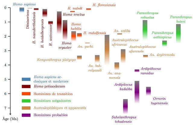 Répartition temporelle des espèces d'hominines majoritairement acceptées en 2016, tenant compte des marges d'erreur dans les datations