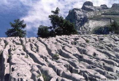 Vue de lapiaz (reliefs karstiques) près de La Clusaz (73)