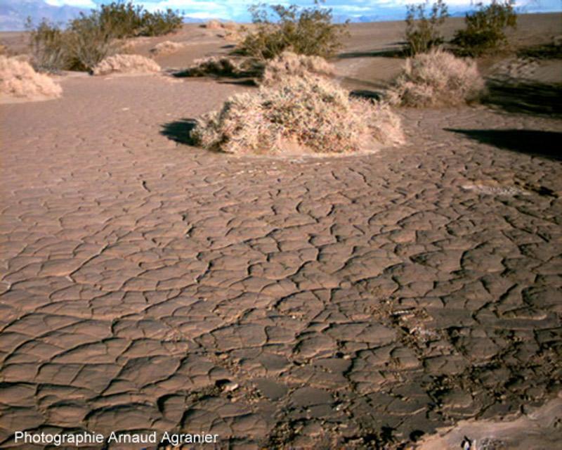 Fentes de dessiccation actuelles, vallée de la Mort (Californie).