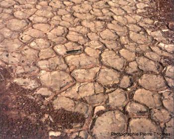 Vue de fentes de dessiccation fossiles