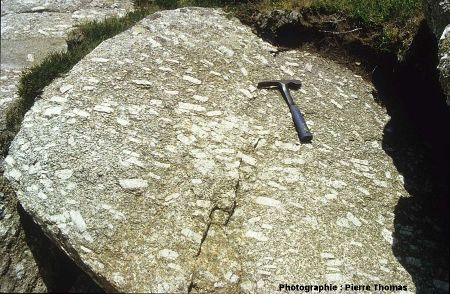 Face d'un bloc de granite porphyroïde orientée perpendiculairement au plan de foliation magmatique