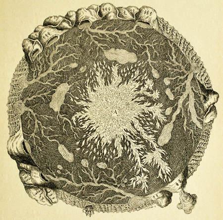 La Terre, montagnes et grottes, dessinée par Athanasius Kircher dans son Mundus subterraneus