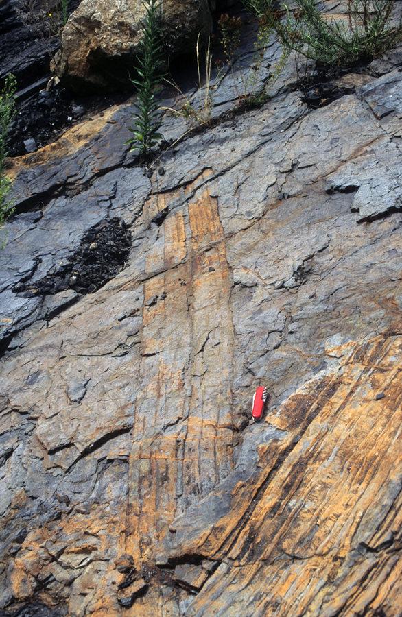 Fossiles de troncs de Calamites à plat dans les couches de charbon (bassin de Graissessac, 34)