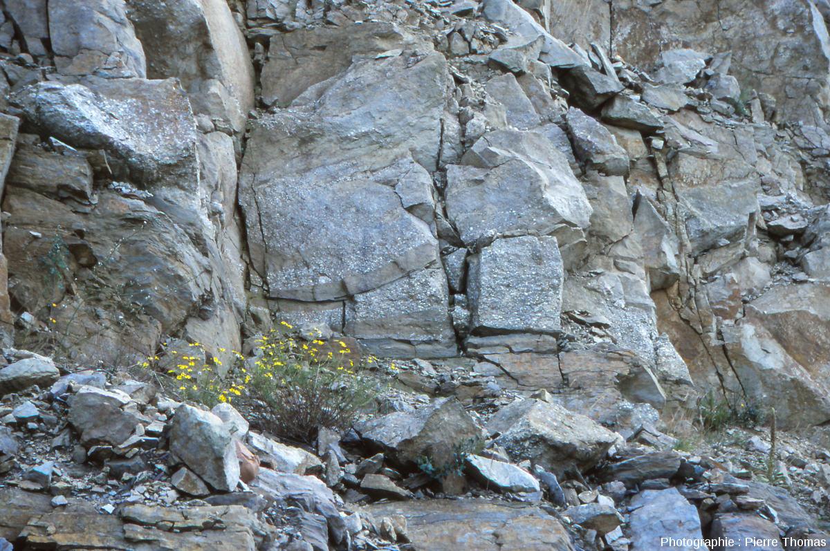 Stratifications obliques observées dans la falaise de grès près du village de Champclauson (30)