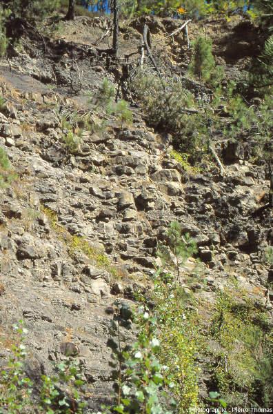 Vue générale de la falaise de grès près du village de Champclauson (30) où ont été trouvés les troncs de sigillaire