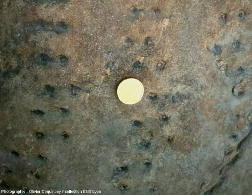 Cicatrices à la surface d'une souche de sigillaire fossile en place dans une falaise de grès, Champclauson, bassin d'Alès (30)