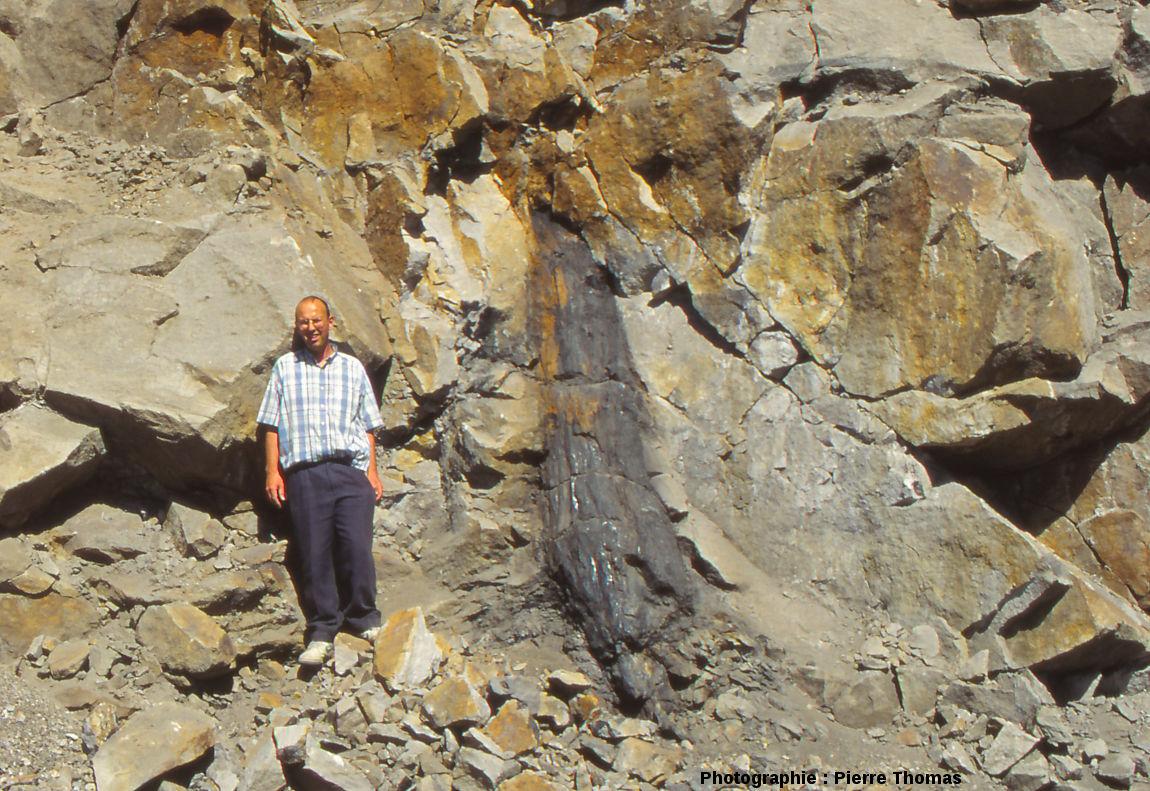"""Tronc """"en charbon"""", en position de vie dans les couches de grès, Portes, bassin d'Alès (Gard)"""
