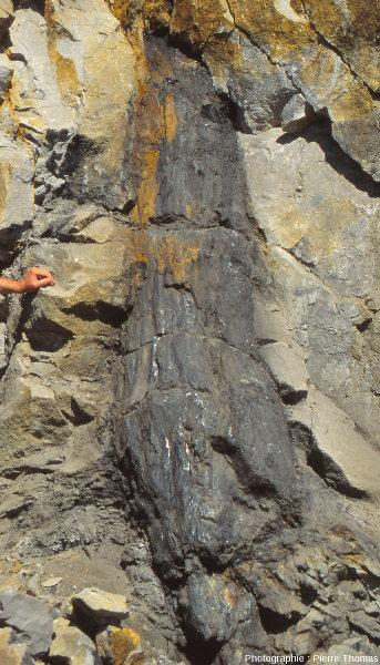 """Vue de détail du tronc en """"charbon"""" de la figure 1, bassin d'Alès (Gard)"""