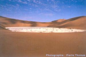 """Un """"vlei"""" mort en Namibie, témoignage d'une catastrophe écologique actuelle"""