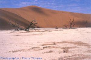 Arbres morts dans un vlei mort de Namibie