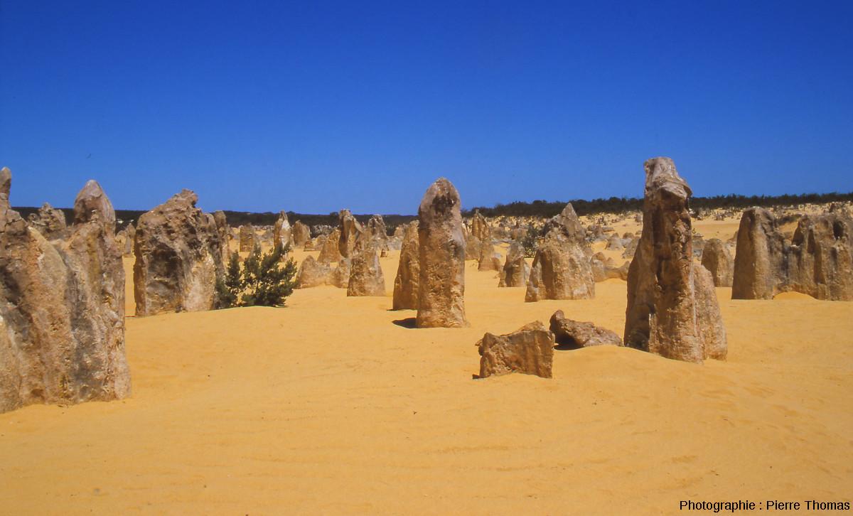 Vue rapprochée des colonnes de grès calcaire dans le Désert des Pinacles (Parc National du Nambung, Australie)