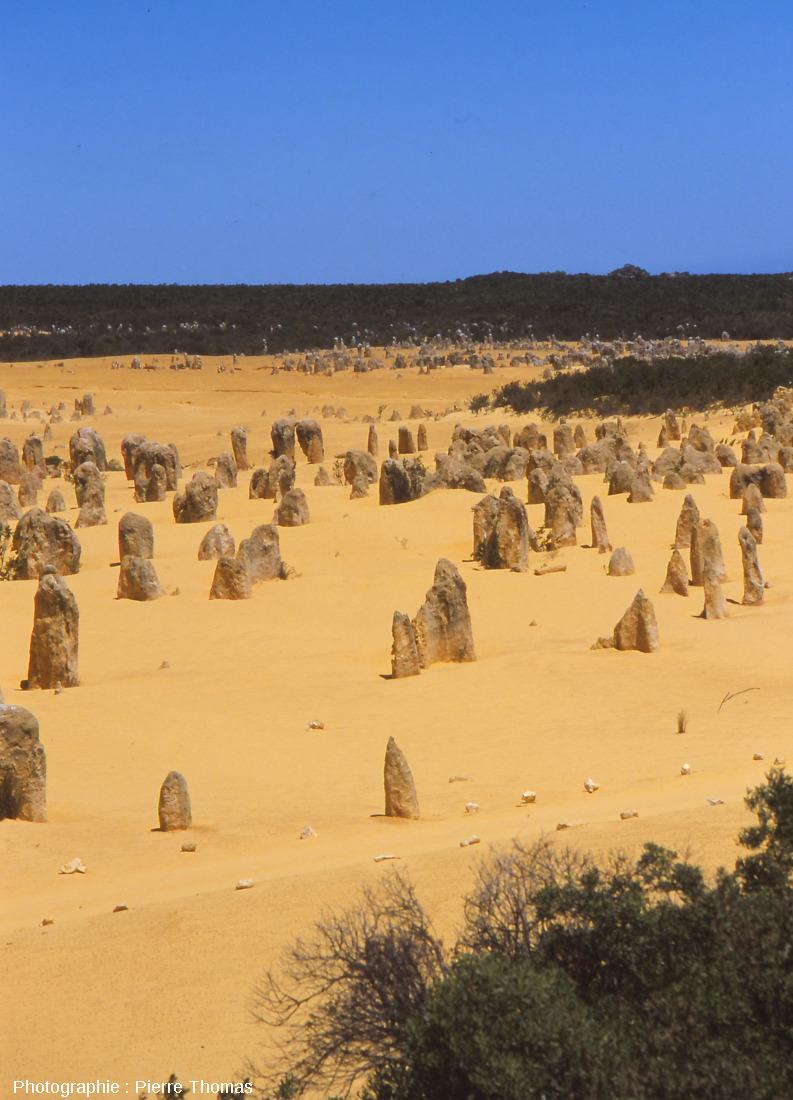 Vue générale des colonnes de grès calcaire dans le Désert des Pinacles (Australie)