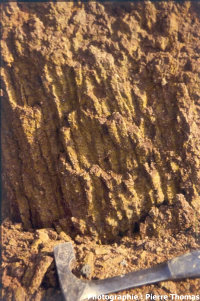 Vue semi détaillée de mini prismations d'argile cuite en base de coulée de lave