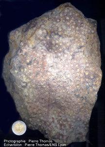 Vue d'ensemble d'une colonie de madréporaire du Dévonien supérieur du Boulonnais (62)