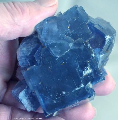Cristaux cubiques de belle taille ramassés dans le même tas d'argile que les autres échantillons de fluorine bleue