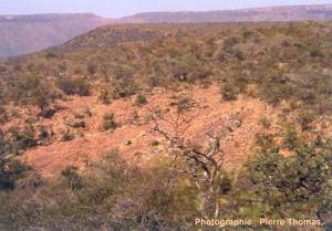Vue générale des dalles de grès liasique (190 Ma)