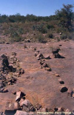 Vue partielle de la piste et végétation environnante