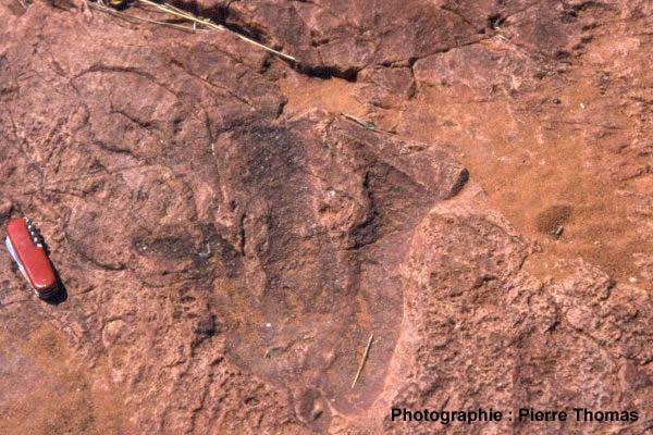 Trace de dinosaure théropode sur des grès liasiques à Otjihaenamaparero (Namibie)