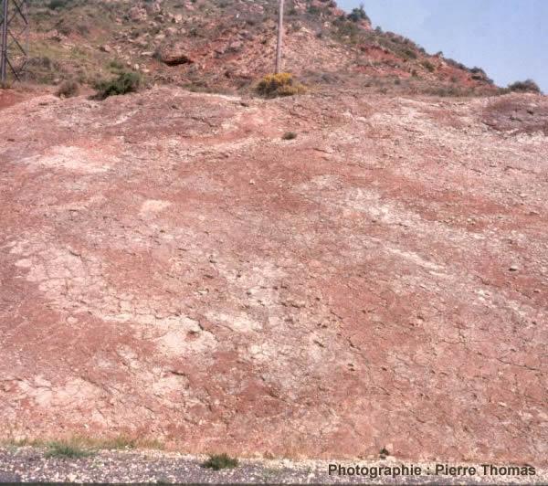 Vue d'ensemble de face de la dalle de la Lieude, montrant une piste de Lunaepes ollierorum qui prend la photo en diagonale (du bas à droite en haut à gauche)
