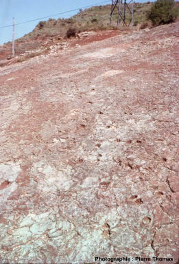 Vue d'ensemble de profil de la dalle de la Lieude, montrant une piste de Lunaepes ollierorum qui prend la photo en diagonale (du bas à droite en haut à gauche)