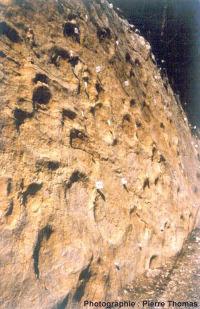 Vue rapprochée de la dalle à empreintes, qui affleure sur une centaine de mètres de long, au bord de la D 60E