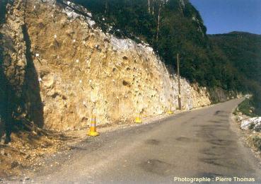 Vue générale de la dalle à empreintes, qui affleure sur une centaine de mètres de long, au bord de la D 60E