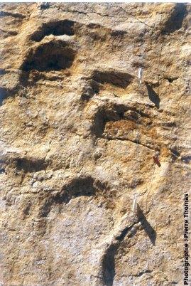 Détail des empreintes de sauropode, Coisia (39)